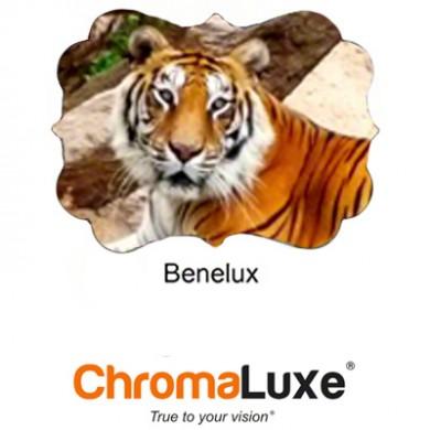 Benelux Large White